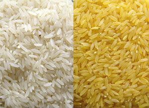 Arroz dorado Las dos caras de las plantas transgénicas: Las semillas Monsanto y el arroz dorado