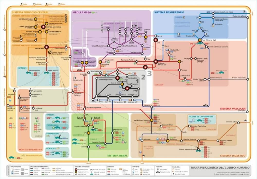 Mapa callejero del funcionamiento del cuerpo humano