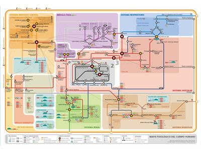 Mapafisiologia Mapa callejero del funcionamiento del cuerpo humano