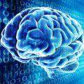Cerebro virtual
