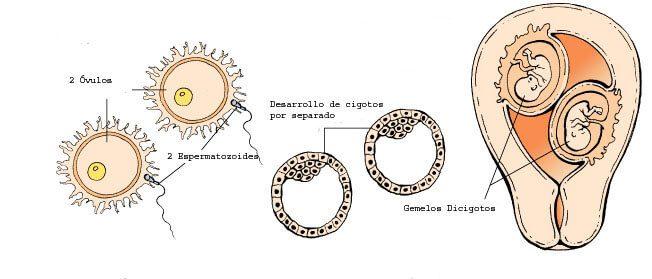 Formación mellizos