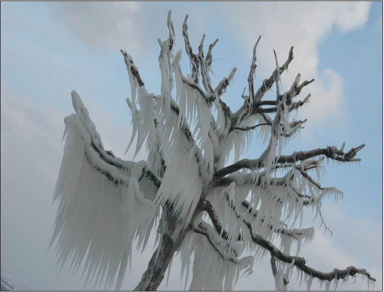Árbol Congelado