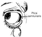 Plica Semilunar