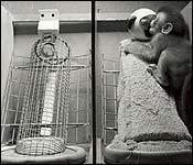 Experimento Mono
